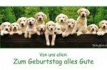 Keith-Kimberlin-Geburtstagskarte-Hunde-Labrador-in-Blechwanne-Panoramakarte-11x22-cm-0-400x262.jpg